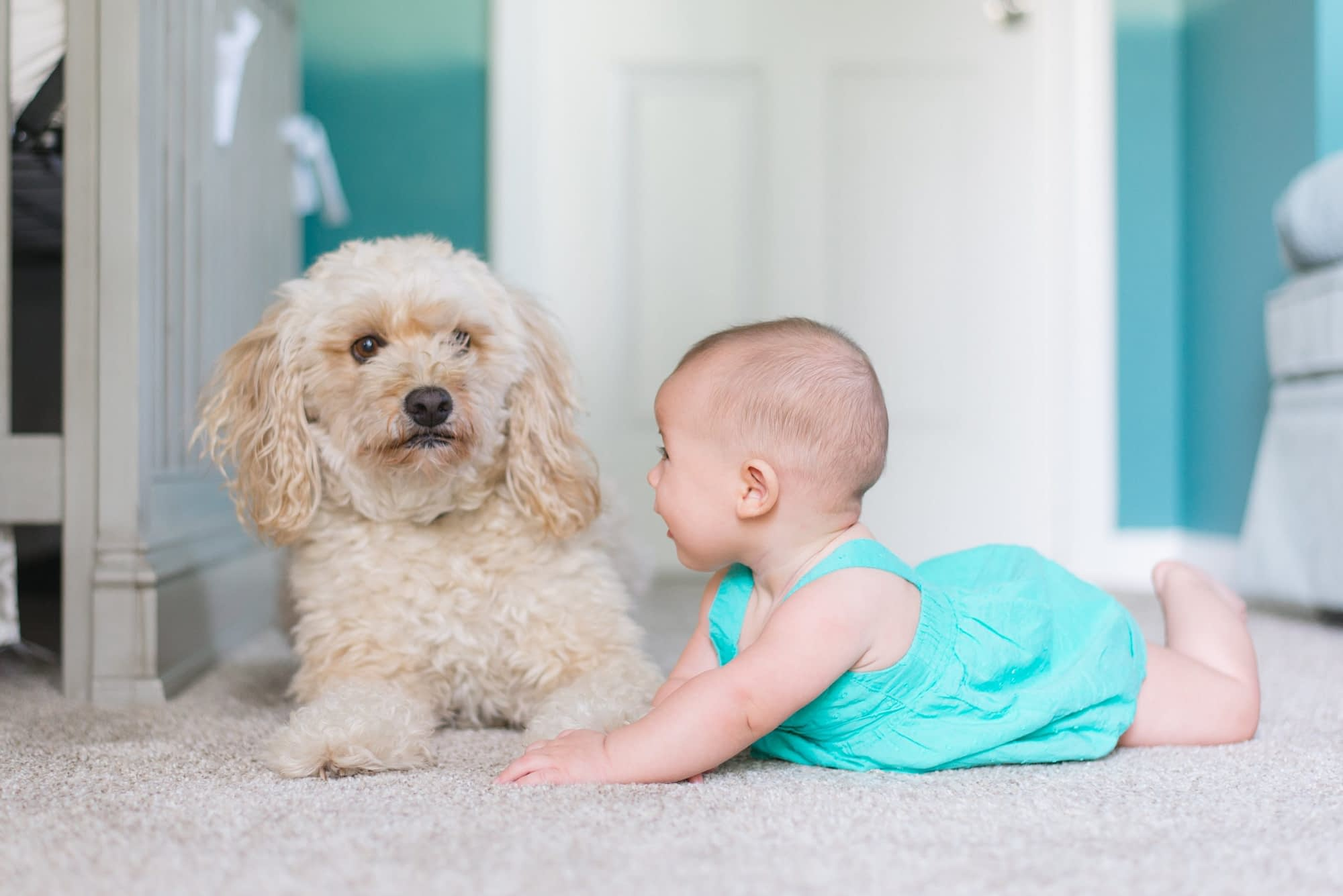 baby and dog on clean carpets